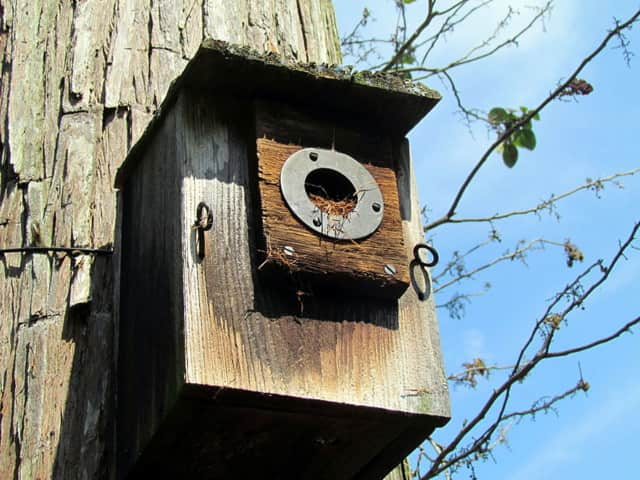 Young people can build a bluebird house in Lewisboro.