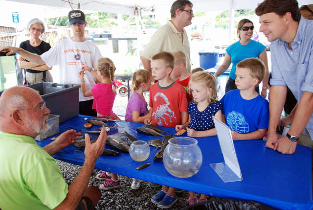 Both kids and adults can get an up-close look at local marine life at Hudson River Day.