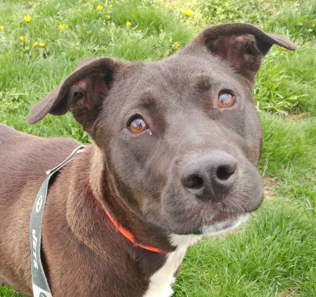 Sandra is looking for her forever home