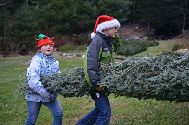 The weather will be unseasonably warm to head out this weekend and cut your own Christmas tree in Connecticut.