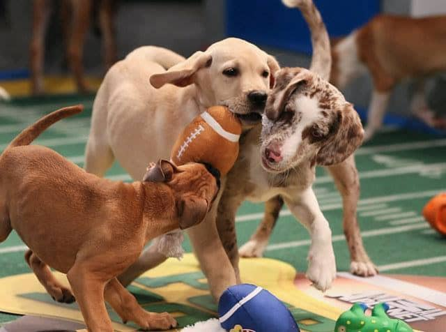 The facility features over 11,000 square feet of indoor and outdoor space for pups to run around with their friends.