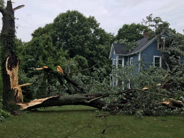 Several trees are down due to storms Wednesday afternoon in North Haven. This tree struck a house and cars on Middletown Avenue, according to the North Haven Fire Department.