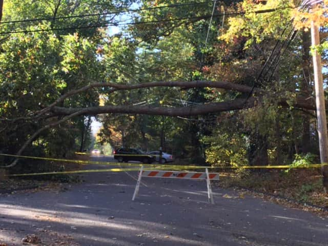 A large tree fell on the power lines on Wahackme Road in New Canaan on Sunday, New Canaan police said.