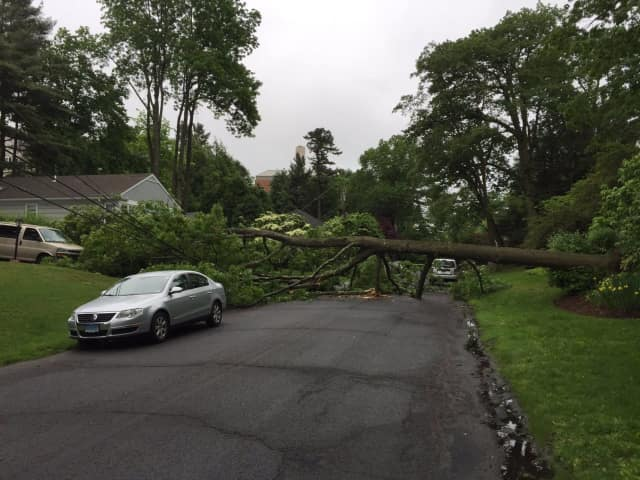 A tree is down on Glen Road in Greenwich on Wednesday morning.
