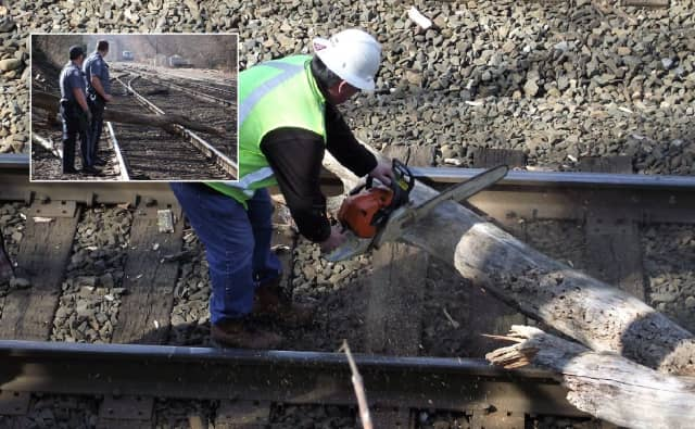 NJ Transit workers remove tree.