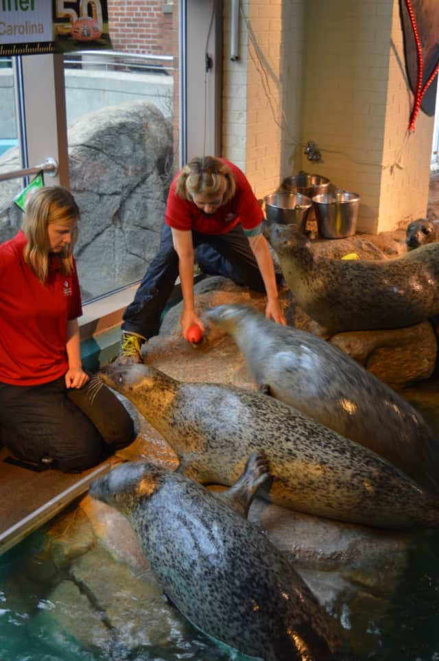 """The Maritime Aquarium at Norwalk was lauded by Yankee Magazine as the """"Best Family Attraction"""" in New England."""