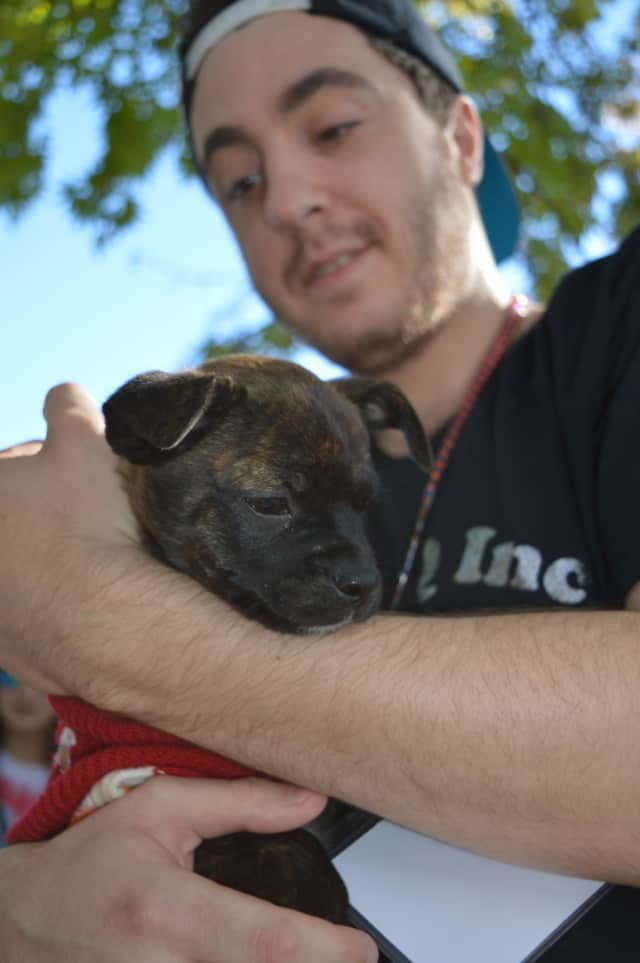 Amy, an 11-week-old Boxer-mix cuddles with Alex at last year's Woofstock event in Tenafly.