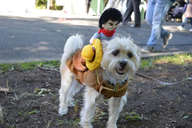 Keep pets safe this Halloween with tips from BluePearl in Paramus.