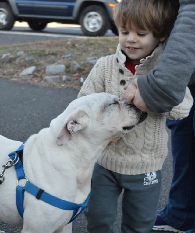 The West Milford Animal Shelter is having a pet protection fundraiser.