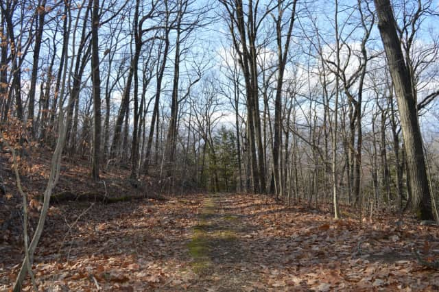 Hikers will hit the trails in Ringwood State Park on New Year's Day.