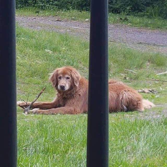 Dakota, who ran away from his Bedford home, may have been frightened by thunder during the height of the storm Monday.