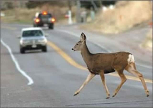 Deer are involved in thousands of collisions in New Jersey every year, with as many as half coming during the fall mating season.