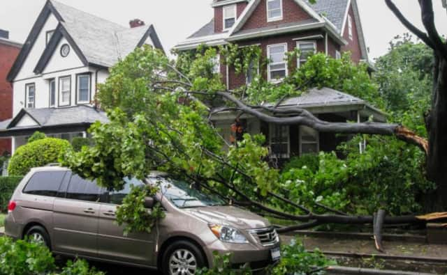 Advocate Brokerage offers information on how to handle damage done by trees.