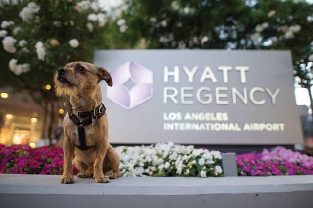 Sir Hyatt is the lovable ambassa-dog at the Hyatt Regency LAX. Courtesy Hyatt Regency.