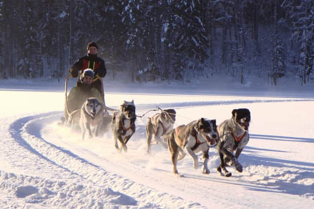 A program on sled dogs will be offered at the Oakland Public Library on Thursday from 3:45 - 4:30 p.m.