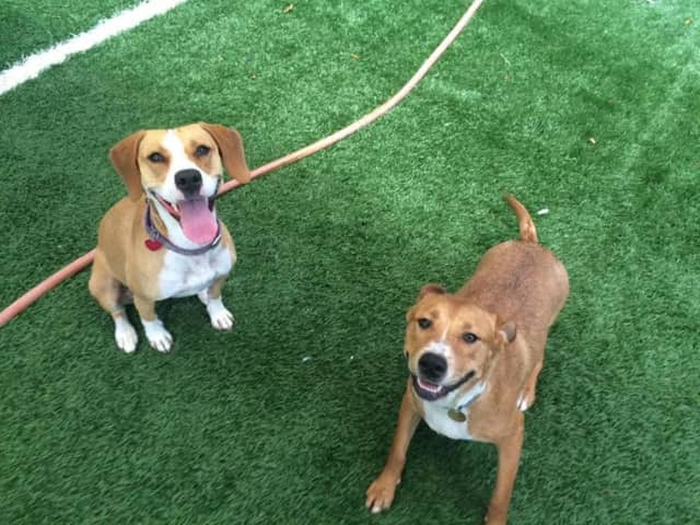 Pets will be available for adoption at an event being held at Franklin Lakes Animal Hospital on Sunday, Oct. 9.