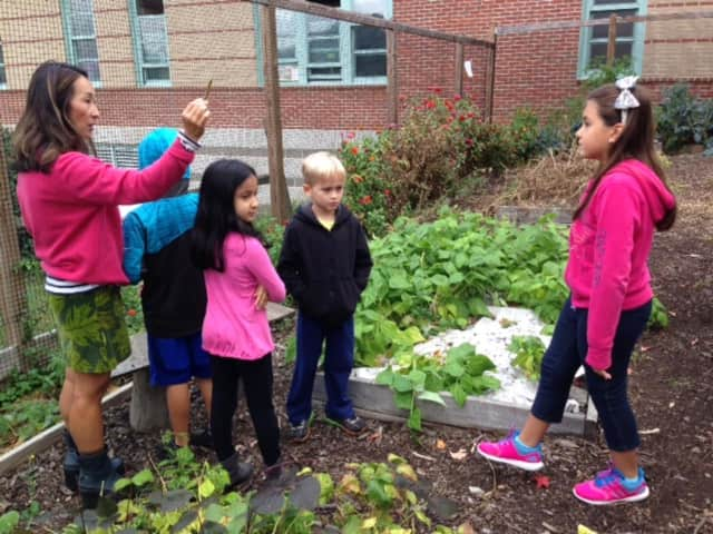 Dows Lane Elementary School third-grade students investigate different botanical families in their school's garden as part of a study on scientific classification.