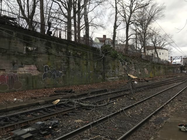 Morris and Essex train services have been temporarily suspended at New Jersey Transit after overhead wires were damaged from a broken tree branch, authorities said.