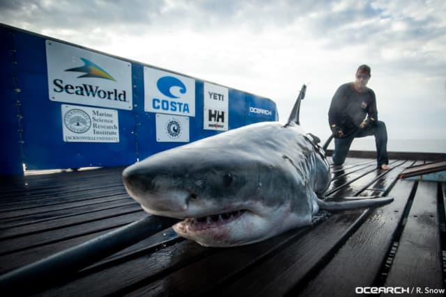 Miss May, a 10-foot 2-inch great white shark was tracked off the coast of Atlantic City Tuesday morning, Ocearch reports.