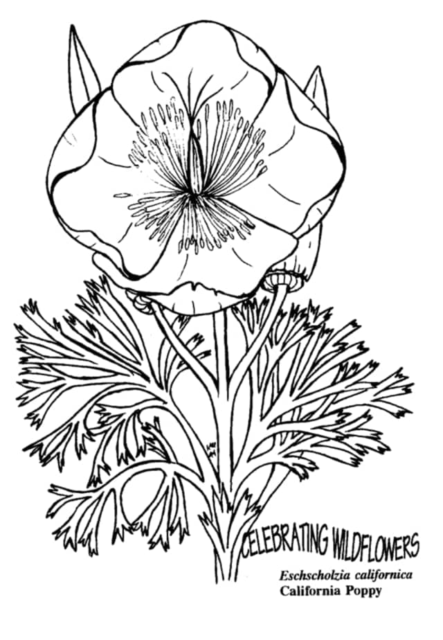 Johnson Library has started a coloring for adults club.