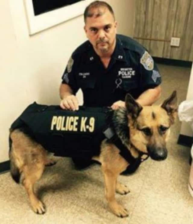 Brewster K-9 Falco, shown here with partner Sgt. Paul Italiano, was diagnosed with lymphoma in October and was expected to live only a few weeks. Falco has been receiving treatment thanks to the generosity of donors. A fundraiser is set for April.