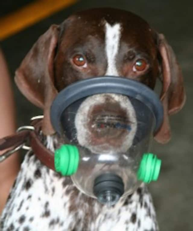 The Passaic County Sheriff's Department K9 Unit needs pet oxygen masks for its dogs.