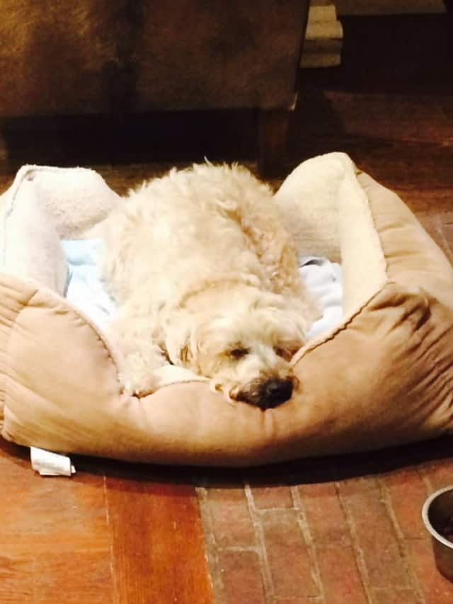Stacy Geisinger's dog Sophie is turning 16.