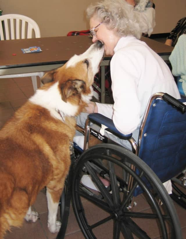 Golden Outreach is a pet visitation program based in Briarcliff Manor that utilizes animals to help people feel and get better. The program is actively seeking sponsors for individual dogs chosen as Outreach pets.