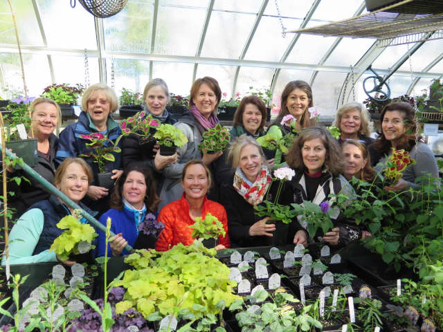 Plants for the May 6 DCA Plant Sale and Afternoon Tea are nurtured by dedicated DCA Greenhouse Group members.