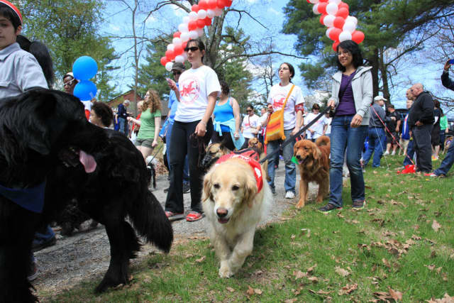 The SPCA's 12th annual Dog Walk and Pet Fair takes place Saturday