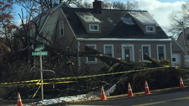 Strong winds blew a large tree into a Maywood home Monday.