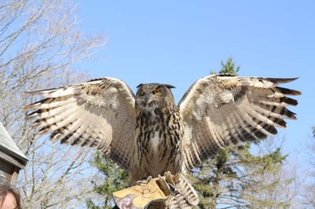 Talons!, an interactive bird of prey experience, will be performing at the Wolf Conservation Center in South Salem on Sunday, April 24. Pre-registration is required.