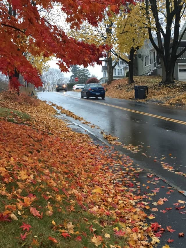 The late-November rain is pulling down the last of the fall leaves across Fairfield County.