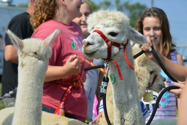 The Passaic County Fair will once again feature a petting zoo.