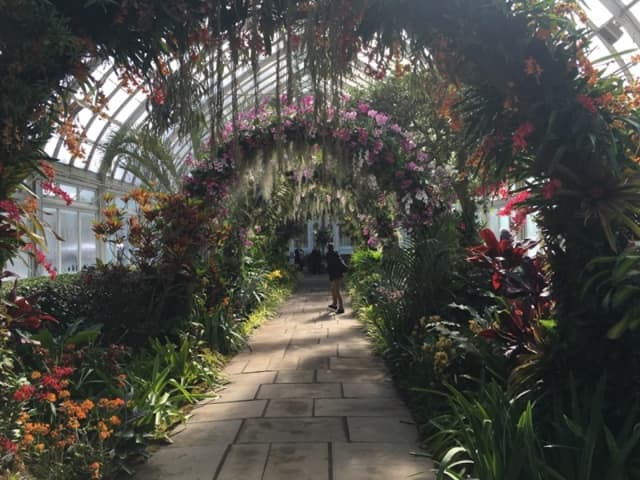 """Scenes from """"The Orchid Show: Singapore,"""" at the New York Botanical Garden, Saturday, Feb. 23 through April 28, include the city's orchid Arches and solar-powered orchid """"Supertrees."""" Photographs by Georgette Gouveia."""
