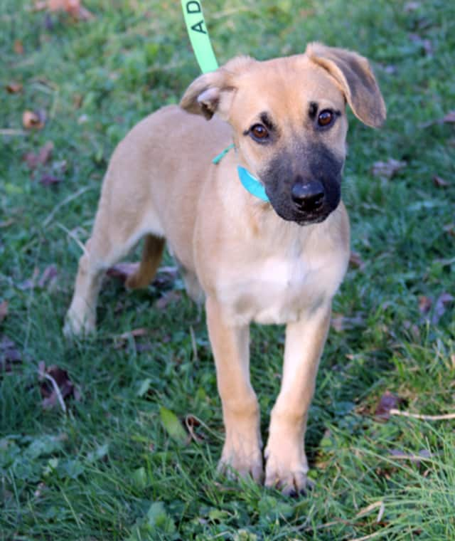 Glen Rock will hold a rabies clinic for dogs who need to get licensed for 2016.