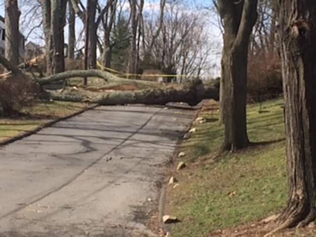 Got winter storm debris? Norwalk is accepting tree debris on Saturday and all of next week.