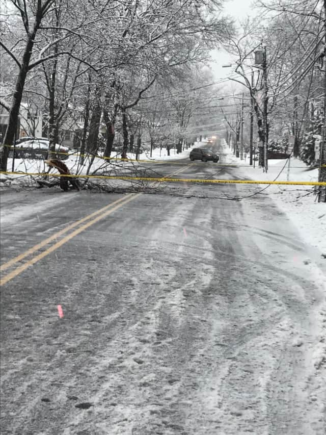 Downed trees and power lines occurred throughout the area.