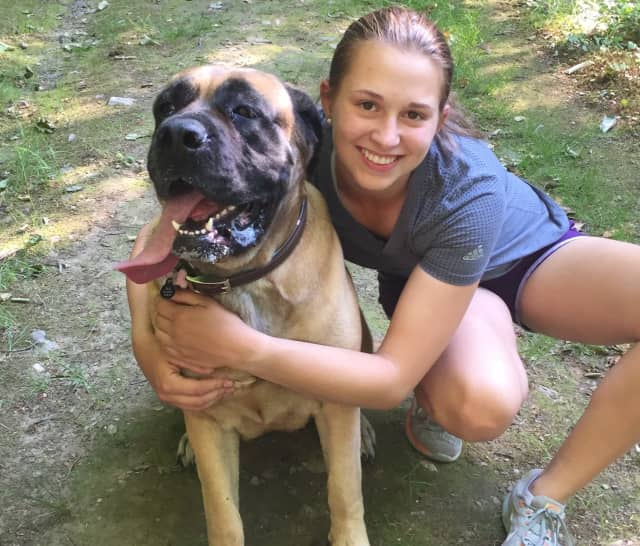 Rosie, a 4-year-old English mastiff, has been missing since Monday, Aug. 1.