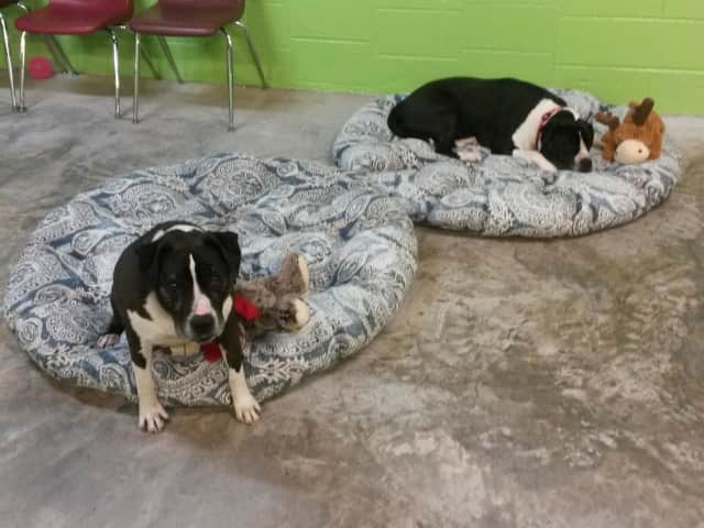 Rocky and Baxter are in need of a forever home.