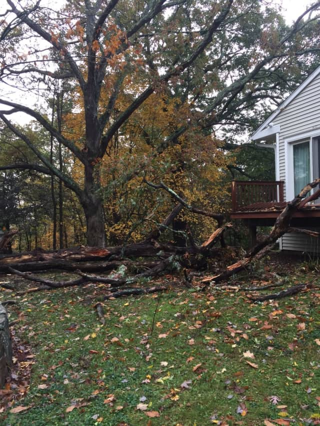 A large tree came crashing down on Oakwood Court in Norwalk as a result of the storm that hit the city late Sunday.