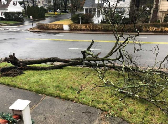 A downed tree in Westwood (Bergen County, NJ).