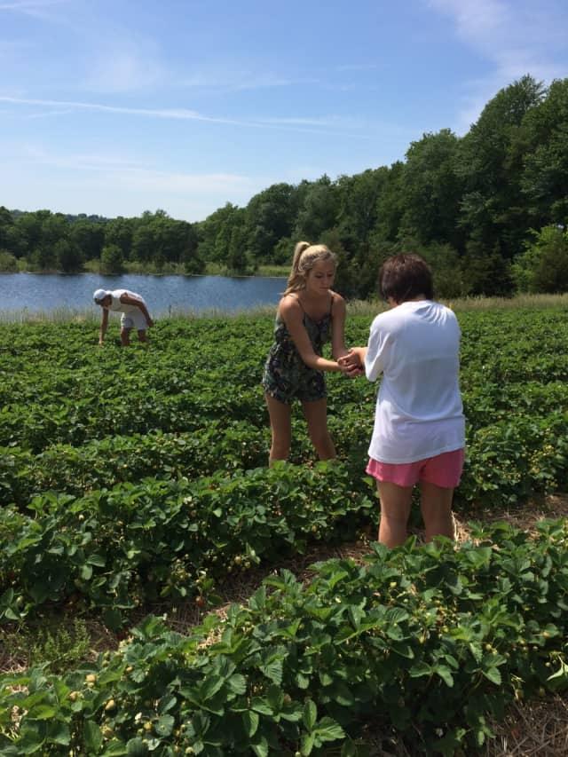 Jones Family Farm is open for strawberry picking on Wednesday.