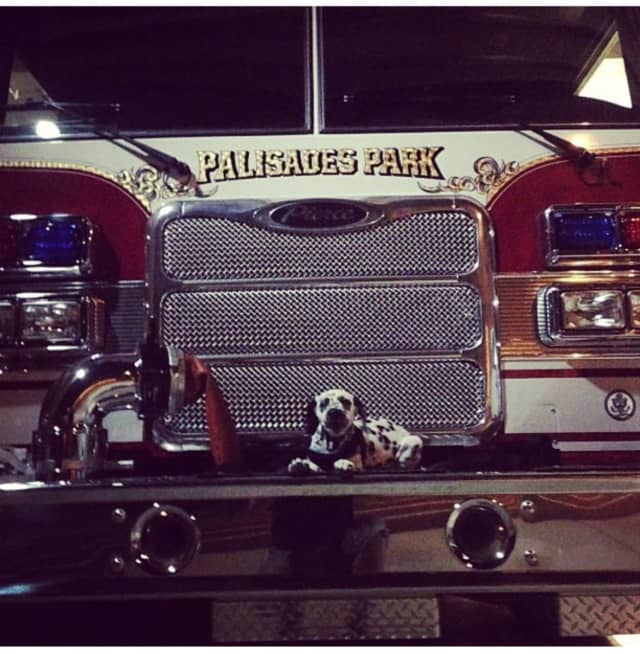 Sarge takes a break on a Palisades Park fire engine.