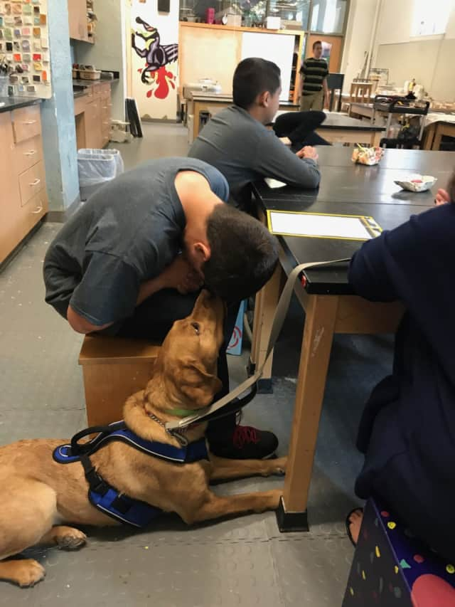 Christian Townsend, a student in Hendrick Hudson High School's SAILOR program, with Ramona, the school's new therapy dog.