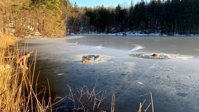 A Yonkers man braved icy waters to save two dogs.