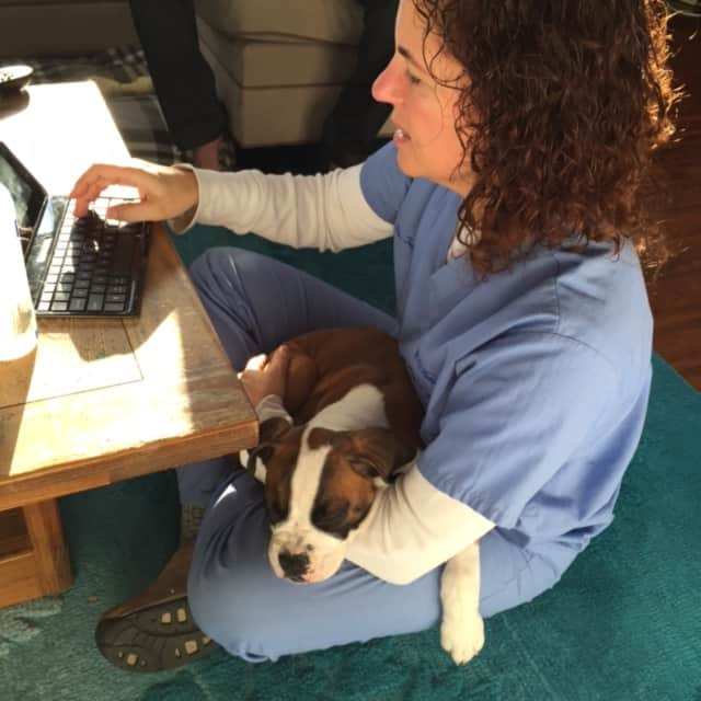 Tracy Cohen-Grady of Hillsdale fills out paperwork as Boxer puppy Marley sleeps in her lap.