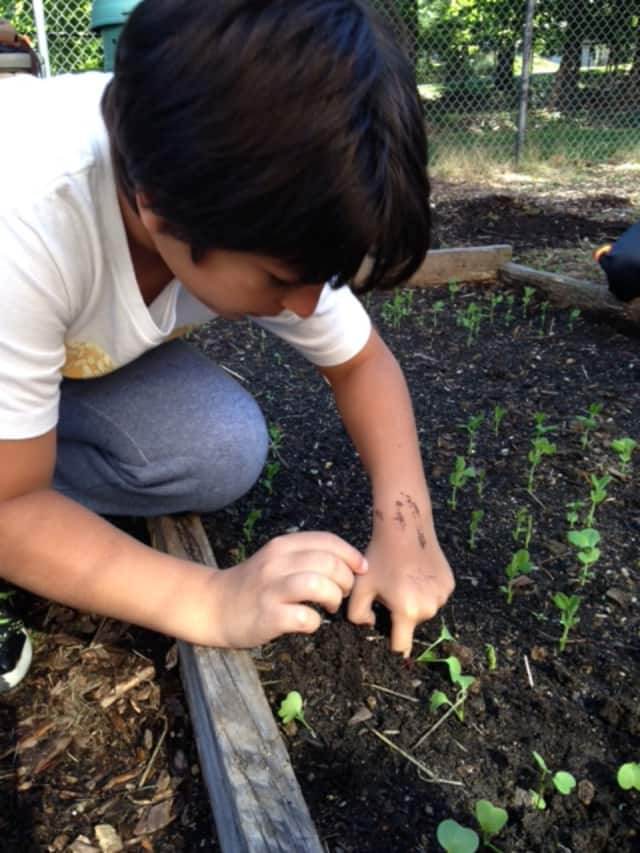 Irvington Middle School students spend time taking care of the garden at their school.