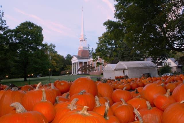 Jesse Lee Pumpkin Patch