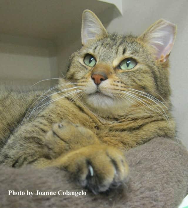 Kelsie is this week's Putnam Humane Society Pet of the Week.